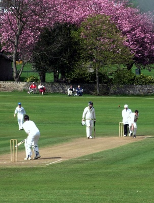 Perfect Cricket Grounds 0800 027 6561